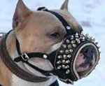 Royal Spiked Leather Dog Muzzle for BullyPit
