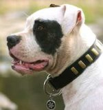 Leather Dog Collar with plates-Alapaha Blood Bulldog COLLAR