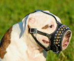 Leather Dog M-Hand Made Leather Muzzle for Alapaha Blood Bulldog