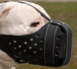Practical Leather Alapaha Blood Bulldog Muzzle for Agitation Training
