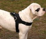 Alapaha Blood Bulldog Nylon-purpose dog harness with handle