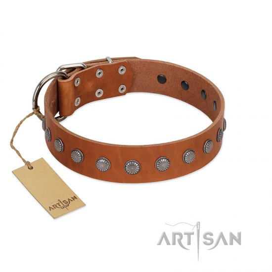 """Little Floret"" Fashionable FDT Artisan Tan Leather Bulldog Collar with Silver-Like Adornments"
