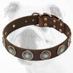 Tan Leather Dog Collar with Silver Plated Circles Blue Stones