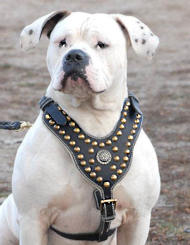 Alapaha Blood Bulldog Harnesses for EveryDay