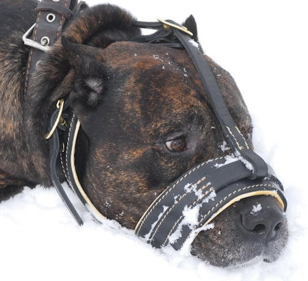 Best American Bulldog  leather nappa dog muzzle