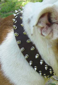 Leather Spiked Dog Collar for Australian Bulldogs
