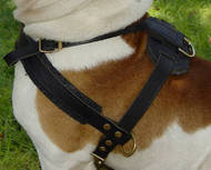 Best Padded Pulling Harness for Australian Bulldog