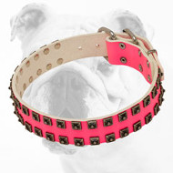 Superior Designed Pink Leather Bulldog Collar with Fancy Studs