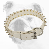 Elegant White Leather Bulldog Collar with 2 Rows of Nickel Spikes