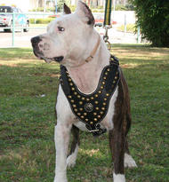 2008 big dog wiring diagram bully dog wiring harness bullypit supplies : www.bulldog-breeds-store.com, bulldog ...