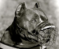 Strong Wire Basket Pitbull Muzzle