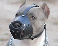 Everyday Leather Muzzle-Dog Muzzle for BullyPit