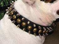 Bulldog Collar-3 Rows Leather Spiked and Studded Dog Collar S55