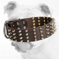 Spiked Wide Leather Bulldog Collar