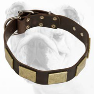 Brass Plated Leather Bulldog Collar
