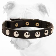 Fantastic Durable Leather Bulldog Collar with Nickel Studs