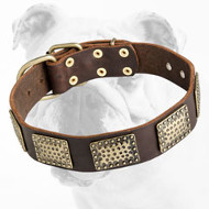 Extraordinary Leather Bulldog Collar with Old Vintage Plates