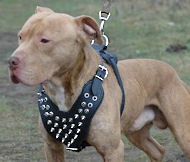 Bulldog Spiked dog harness - Leather Dog spike harness