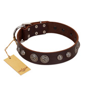 """Choco Brownie"" FDT Artisan Brown Leather Bulldog Collar Adorned with Silver-Like Conchos"