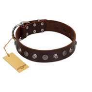"""Dark Chocolate"" Handmade FDT Artisan Brown Leather Bulldog Collar with Studs"
