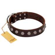 """Lucky Silver"" Designer Handmade FDT Artisan Brown Leather Bulldog Collar"