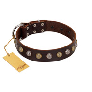 """Gape Buster"" FDT Artisan Brown Leather Bulldog Collar with One Row of Studs"