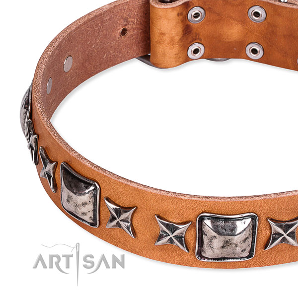 Comfy wearing embellished dog collar of strong full grain leather