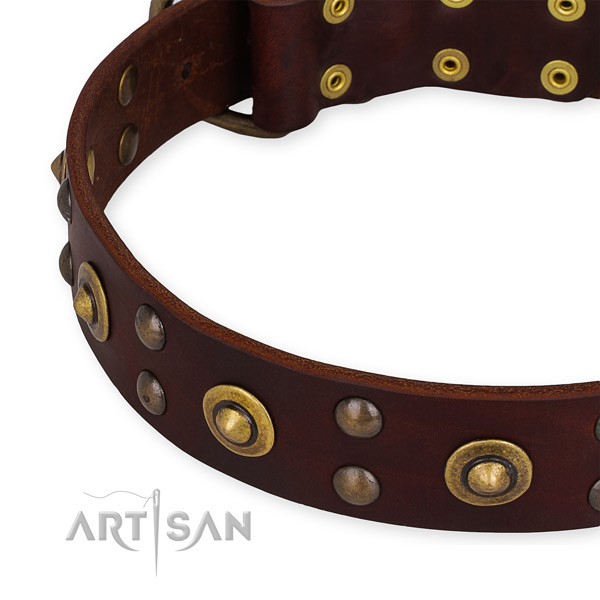 Genuine leather collar with rust-proof fittings for your beautiful four-legged friend