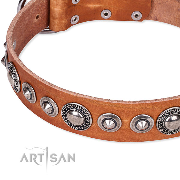 Daily walking adorned dog collar of strong full grain natural leather