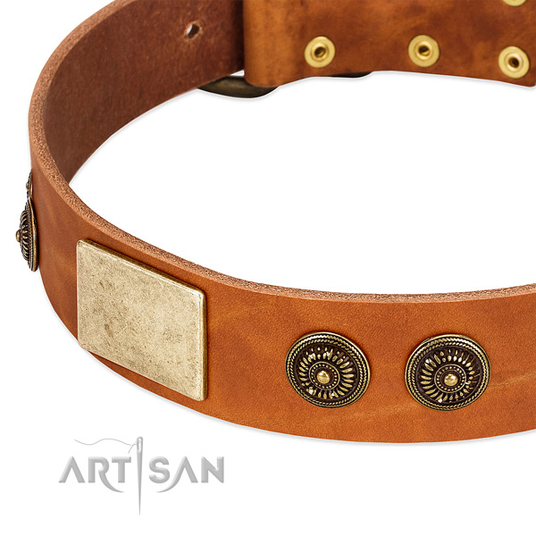Adorned dog collar handmade for your handsome four-legged friend