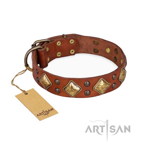 Everyday walking remarkable dog collar with rust resistant buckle