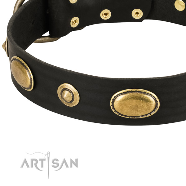 Strong adornments on full grain natural leather dog collar for your four-legged friend