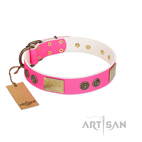 Amazing leather dog collar for walking