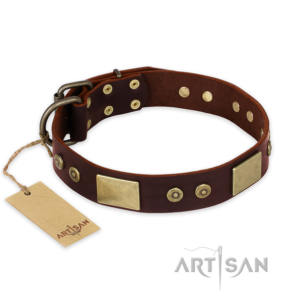 Significant leather dog collar for stylish walking