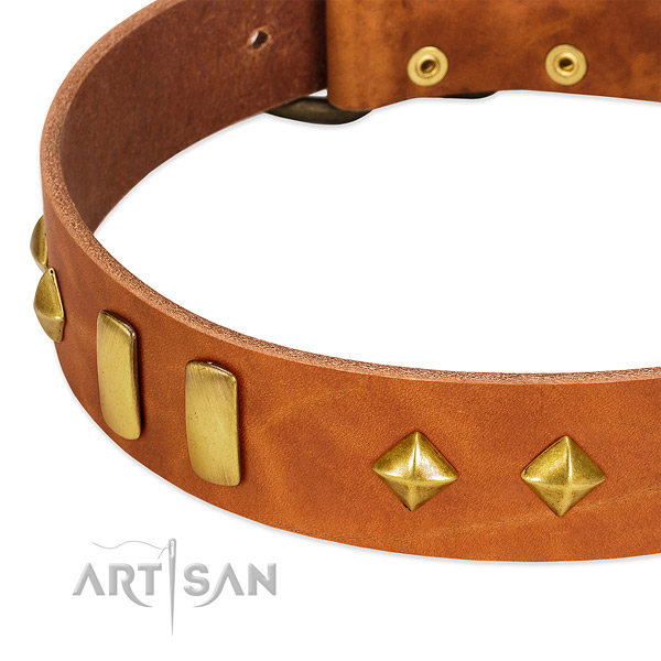 Daily use leather dog collar with fashionable studs
