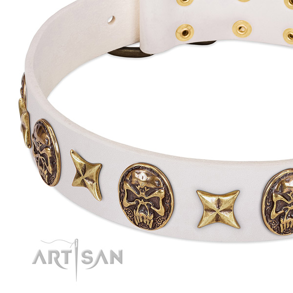 Trendy dog collar made for your attractive dog