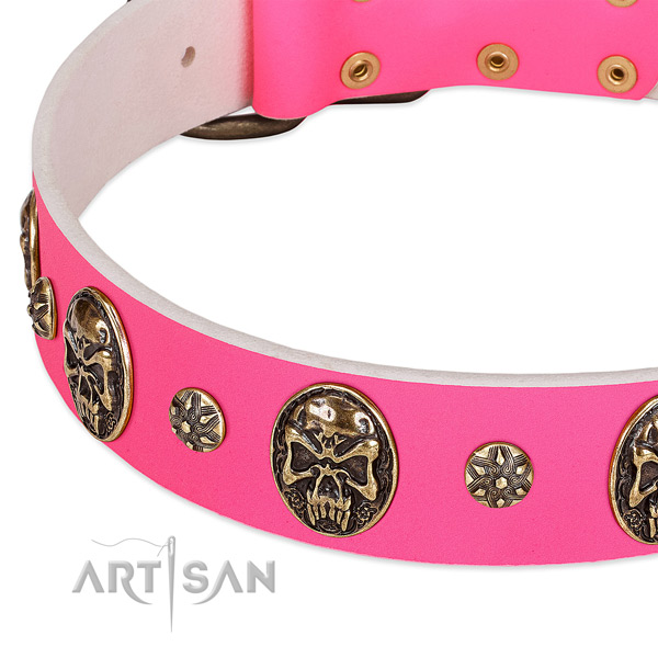 Top quality dog collar made for your attractive pet