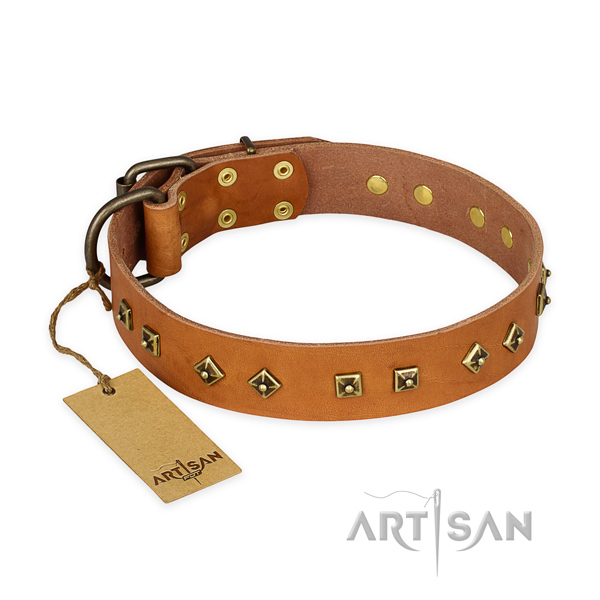 Stunning natural leather dog collar with rust-proof fittings