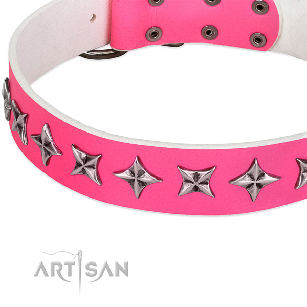 Walking studded dog collar of reliable full grain leather