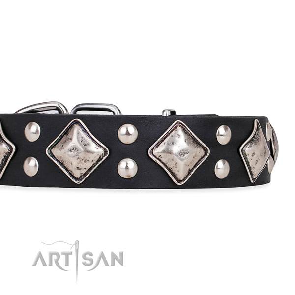 Natural leather dog collar with stylish corrosion resistant adornments
