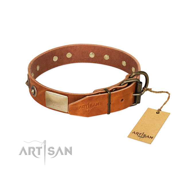 Reliable buckle on stylish walking dog collar