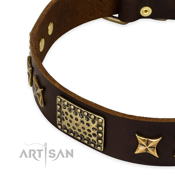 Leather collar with corrosion proof fittings for your attractive canine