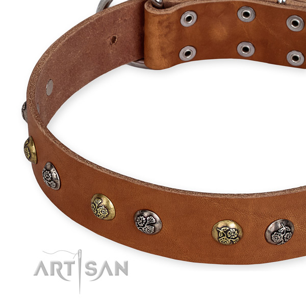 Full grain leather dog collar with stunning corrosion proof adornments