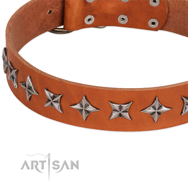 Walking studded dog collar of fine quality leather