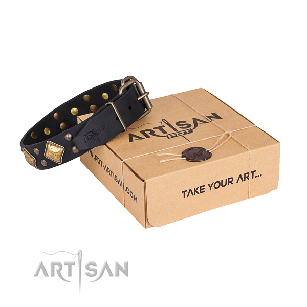 Fancy walking dog collar with Inimitable reliable embellishments