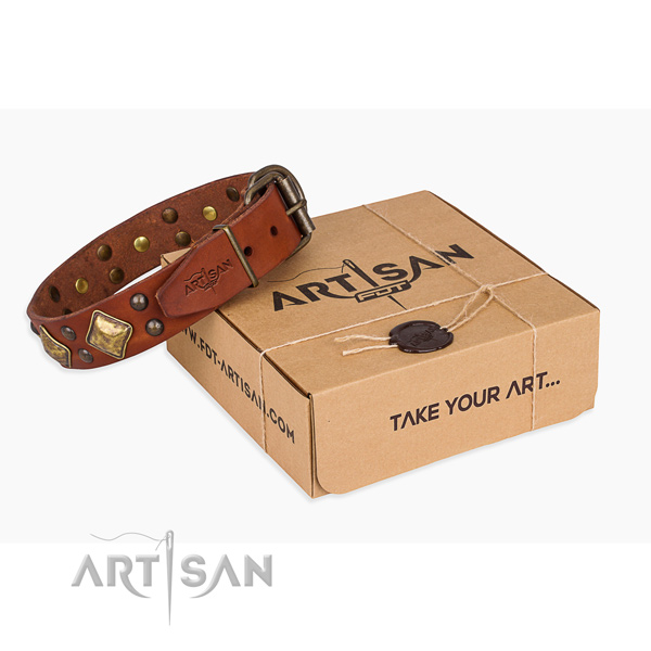 Daily walking dog collar with Designer rust resistant embellishments