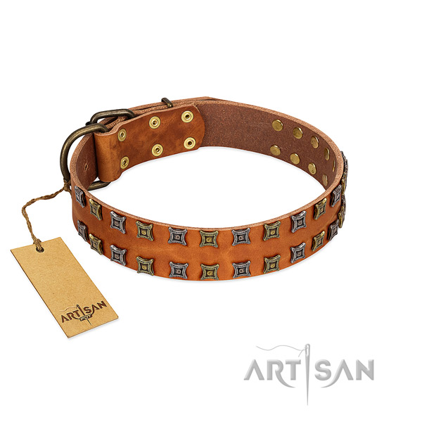 High quality leather dog collar with embellishments for your canine
