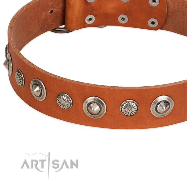 Incredible adorned dog collar of best quality natural leather