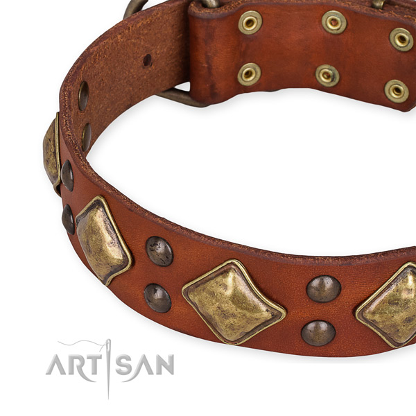 Genuine leather collar with durable fittings for your lovely four-legged friend