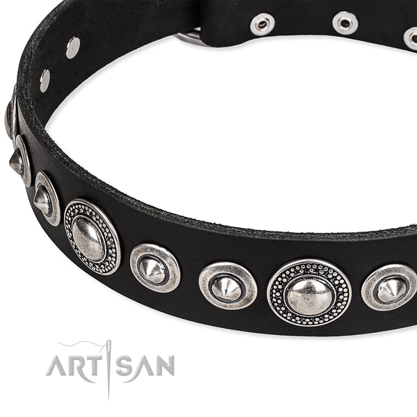 Comfy wearing studded dog collar of durable full grain leather